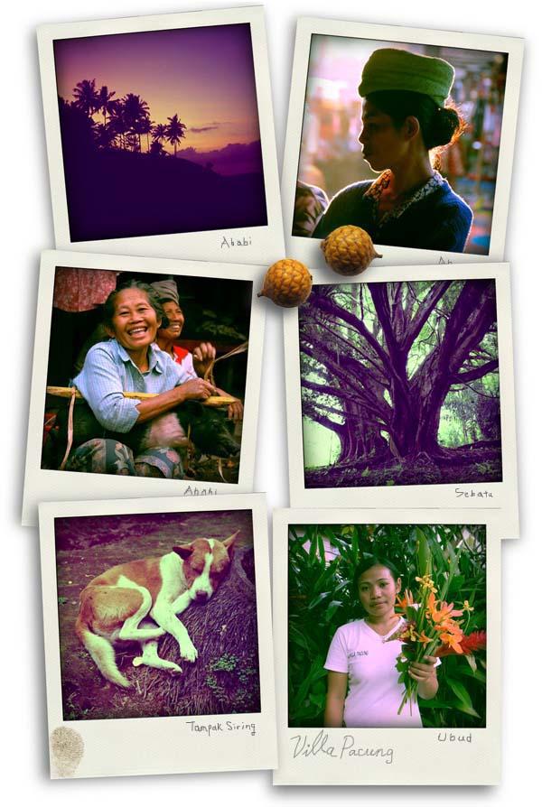 Bali Polax6.jpg