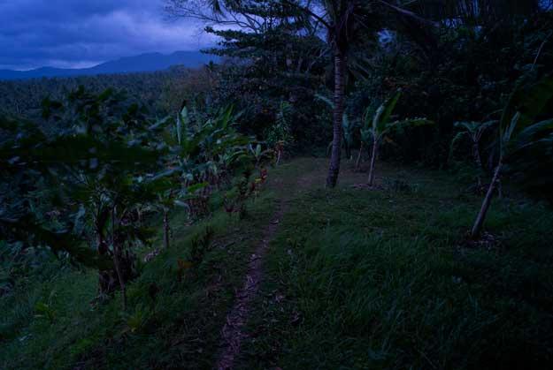 moonlight-walk.jpg