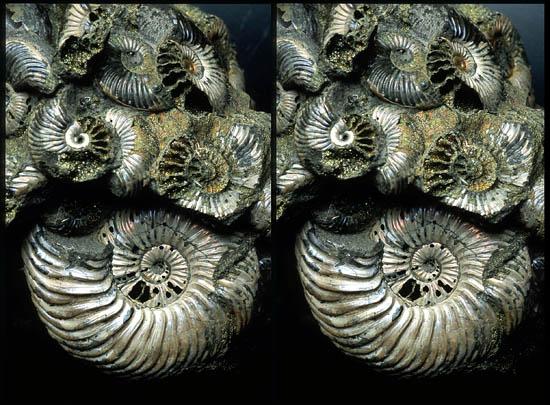 3D Ammonite.jpg