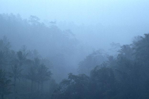 霧の椰林.jpg
