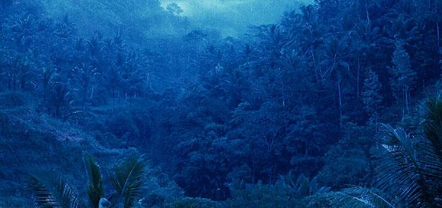 bali forest.jpg